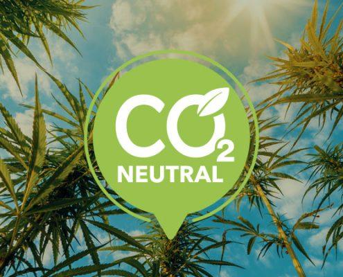Hemp plants for net zero carbon